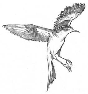 mockingbird_rough_1
