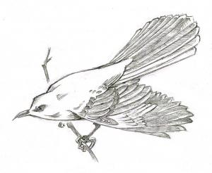 mockingbird_rough_2
