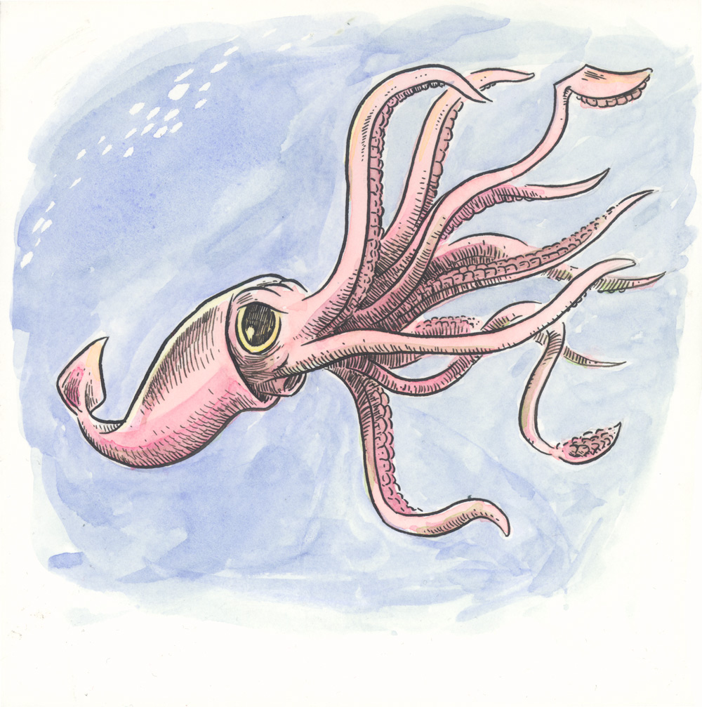 Uncategorized Squid Drawings animal alphabet g is for giant squid ben towle cartoonist the