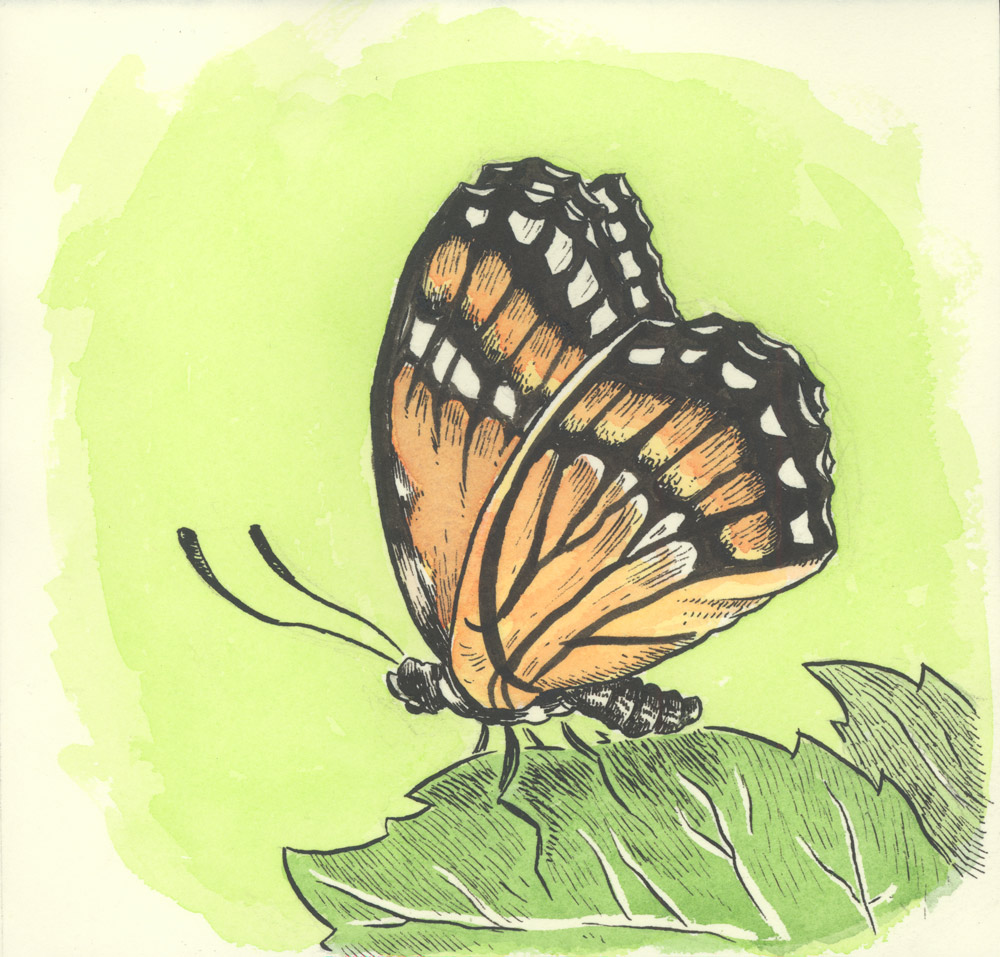 V Is For Viceroy Butterfly Ben Towle Cartoonist Educator Hobo